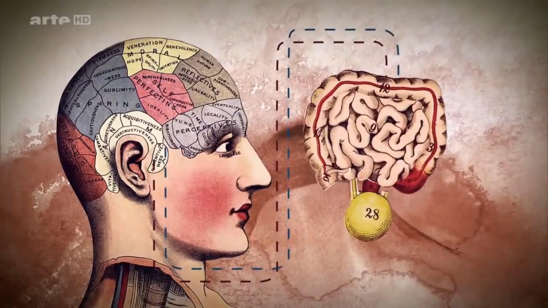 """Résultat de recherche d'images pour """"lien intestin cerveau"""""""